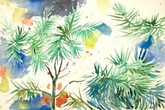 10030, Nadelbäume, 1980, Aquarell / Papier, 39x57,5 cm
