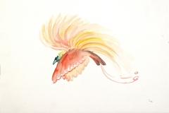 13062, Vogel, Aquarell/Papier, 26x36 cm