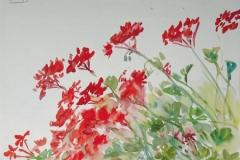 948, Geranien, Aquarell, 40 x 30 cm